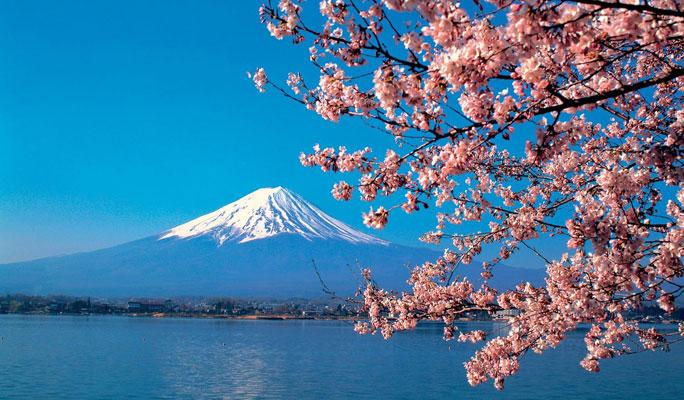 ภูเขา ฟุจิ กับ ดอกซากุระ